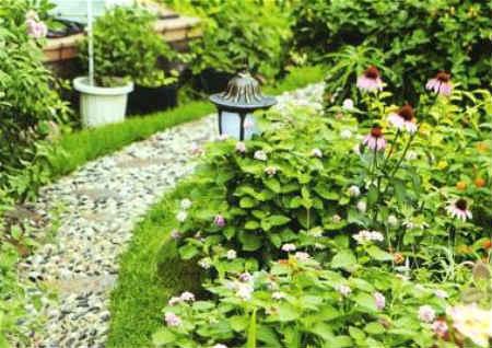 庭院植物与风水禁忌