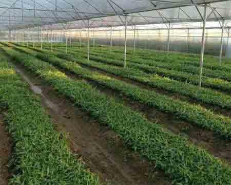 农业科技公司起名
