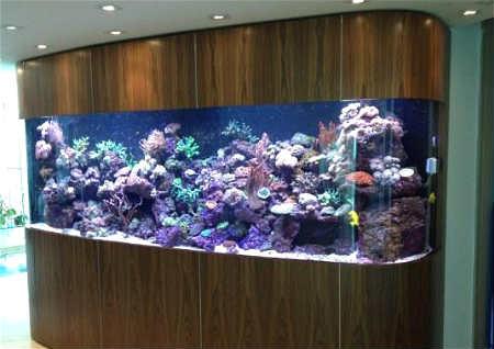 客厅鱼缸摆放位置图