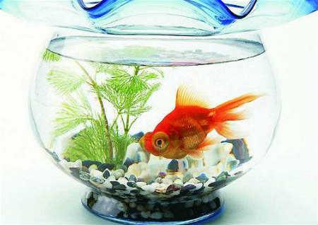 家中鱼缸形状风水