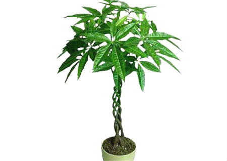 室内植物摆放