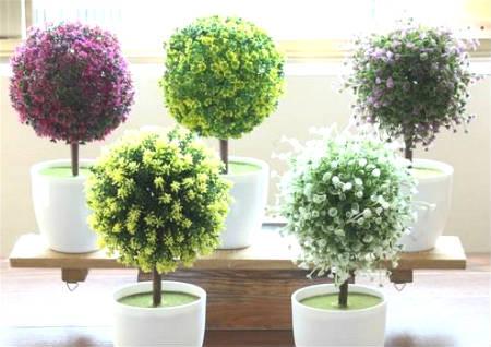 办公室植物摆放风水禁忌