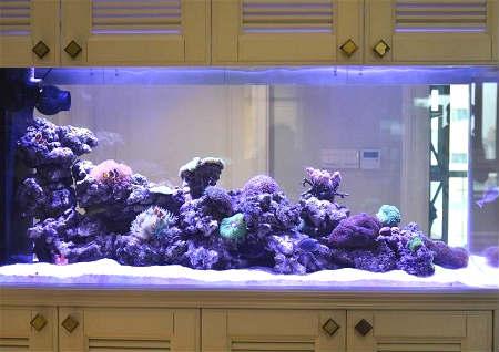 鱼缸风水禁忌