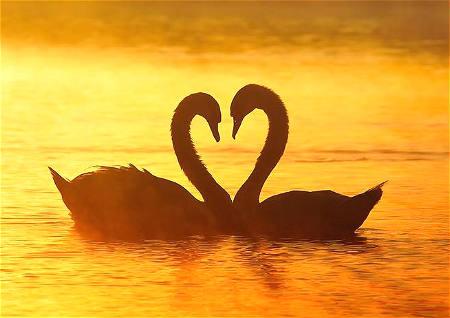 爱情顺利风水
