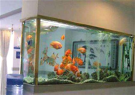 鱼缸摆放客厅哪里好