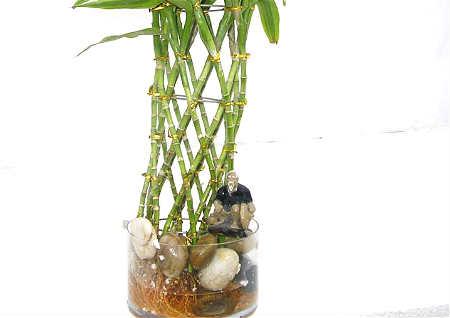 茶楼植物风水