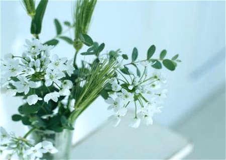 客厅植物摆放风水禁忌