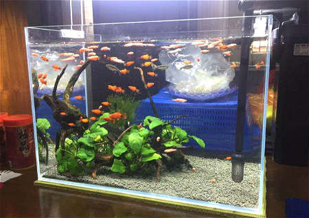 家中鱼缸摆放风水禁忌