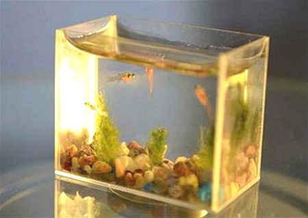 客厅摆放鱼缸的风水布局