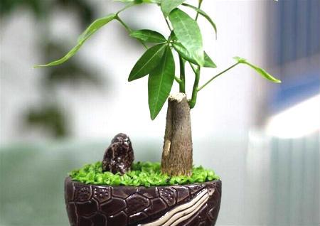 风水中最招财的植物