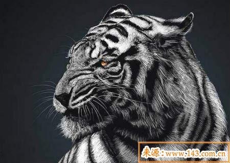 白虎煞是什么、化解图