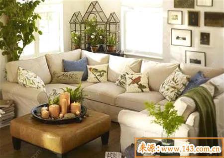 客厅摆放植物风水