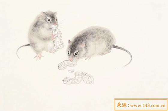 属鼠的人命运如何