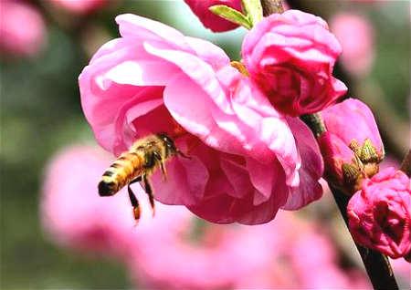 招桃花的植物有哪些