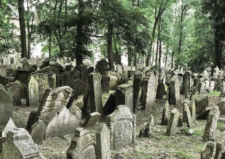 坟墓上长树好不好