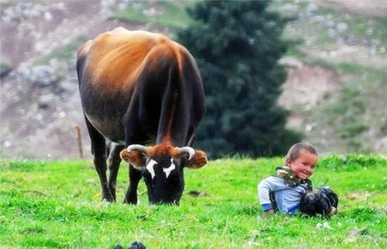 2020年属牛的人财运如何