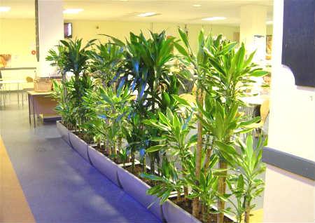 办公室摆什么风水植物好