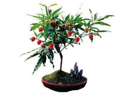 辟邪植物有哪些
