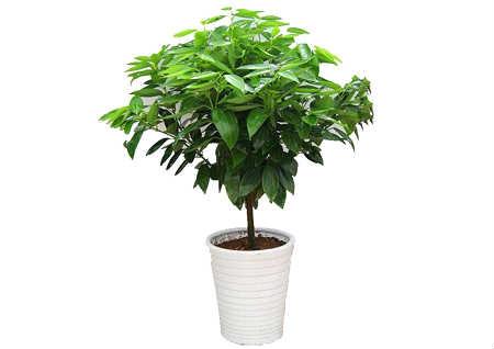 玄关摆什么植物风水好