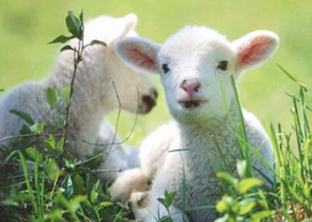 2020年属羊的人财运如何