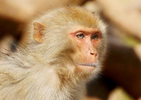 2020年属猴的人财运如何