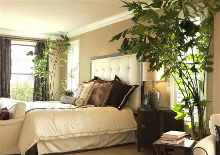 卧室摆放什么植物风水好