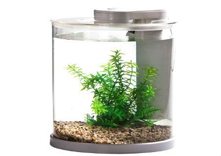 鱼缸对门风水好吗