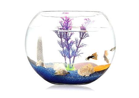 鱼缸的风水作用