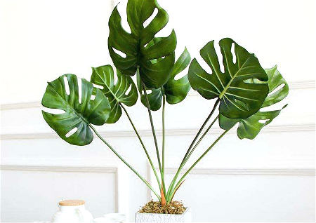 风水化煞植物有哪些