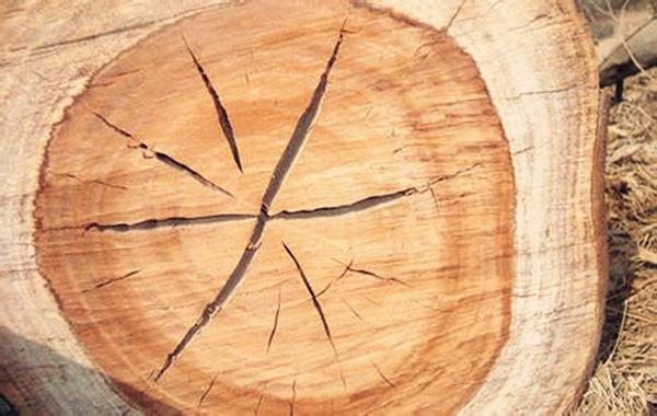 八字缺木怎么补