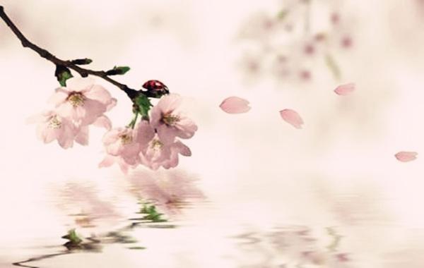 八字测桃花