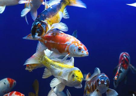 家居养鱼风水数量