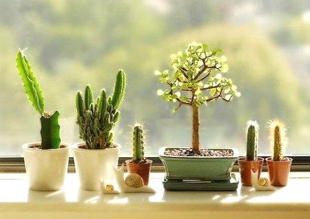 家居植物摆放风水