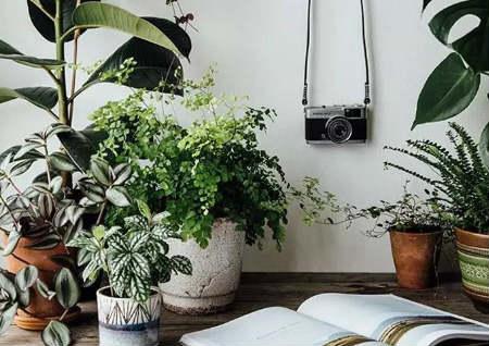 家里绿植摆放风水