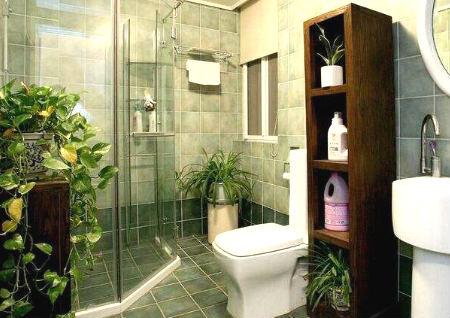 卫生间摆放什么植物风水最好