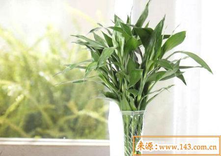 十大阳台化煞招财植物