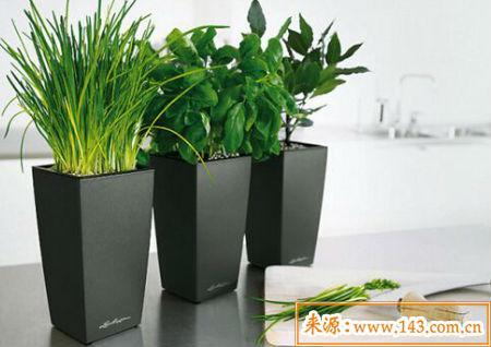 住宅植物摆放风水禁忌