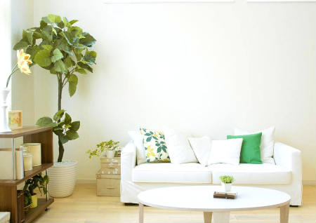 适合家里养的风水植物有哪些