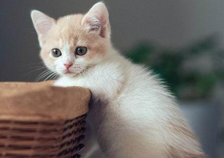 适合养猫的风水