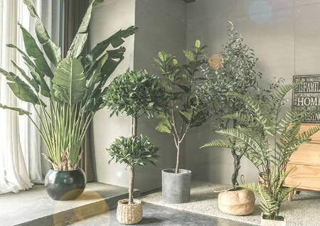 室内植物摆放风水禁忌