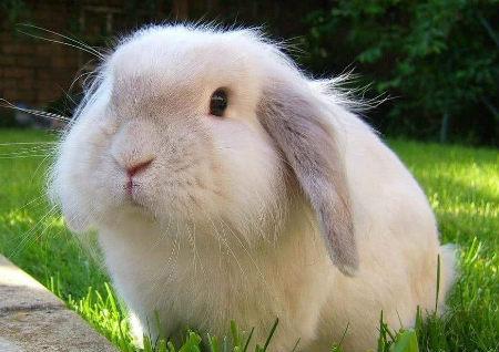 属兔人办公室风水布局