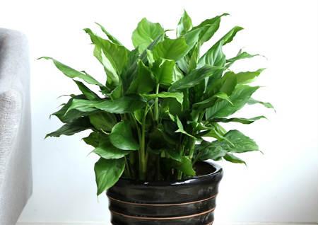 风水上招财的植物有哪些