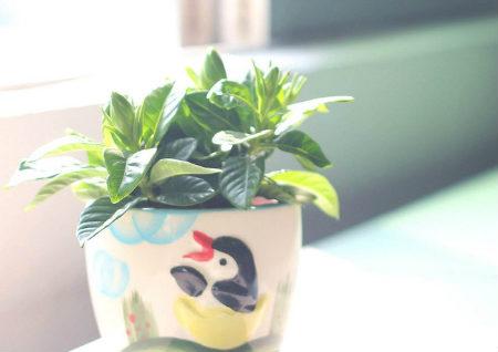 店铺摆放什么植物招财
