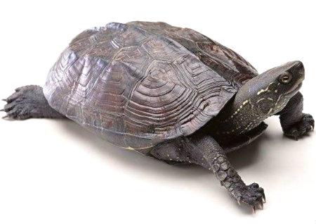 办公室养龟的风水讲究