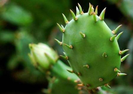 带刺植物的风水