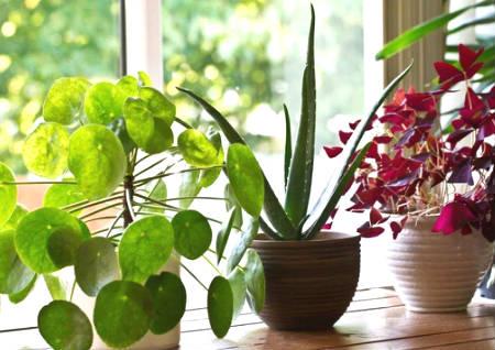 家里植物太多风水好不好