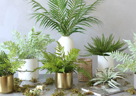 厨房风水摆放什么植物最好