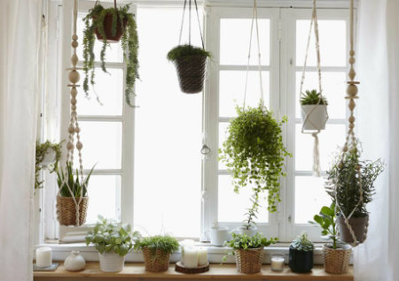 窗台摆什么植物风水好