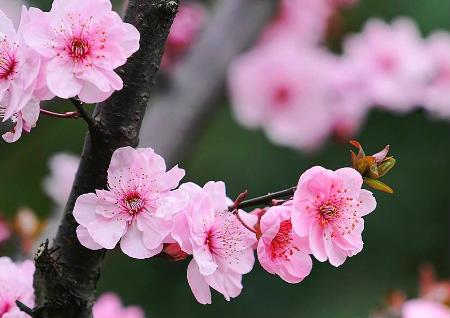 斩桃花的风水方法