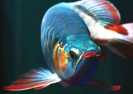 金龙鱼的风水意义